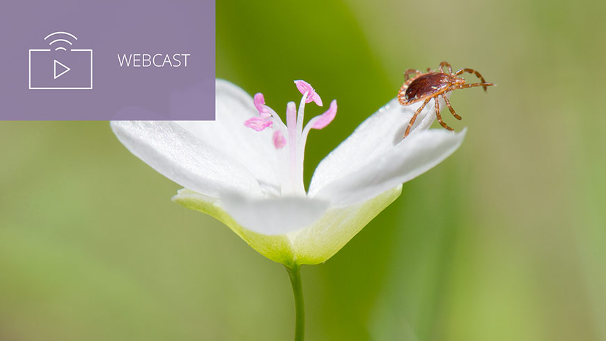 Photo Of Lone Star Tick On Flower And White Sans-serif Type In Upper Left On Muted Lavender Background With Webcast Icon