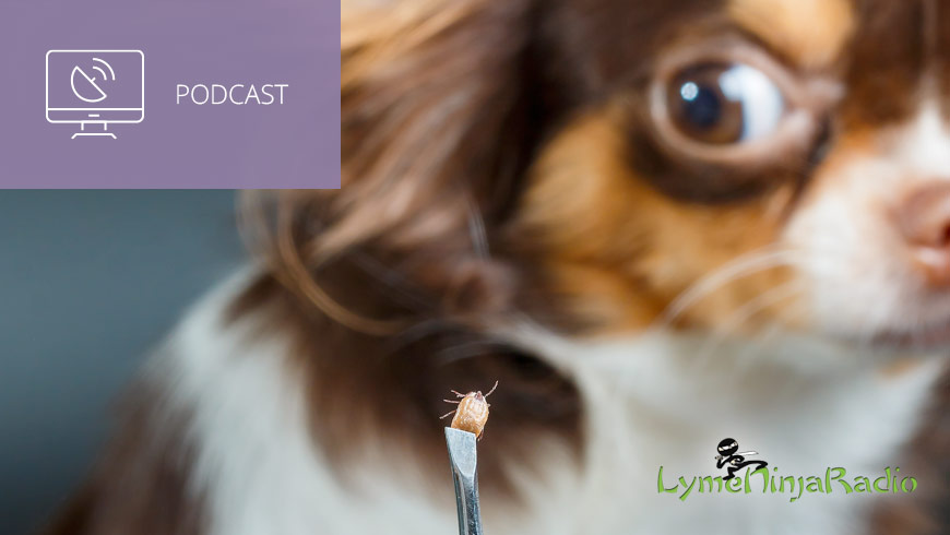 Photo Of Dog And Tick In Tweezers With LymeNinja Logo And White Sans-serif Type In Upper Left On Muted Lavender Background With Podcast Icon